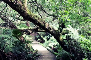 ForestWalk (10)