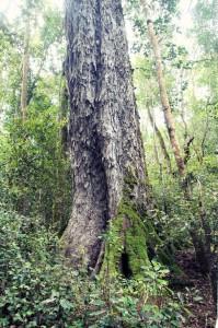ForestWalk (11)