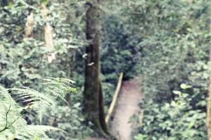 ForestWalk (13)