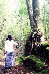 ForestWalk (4)
