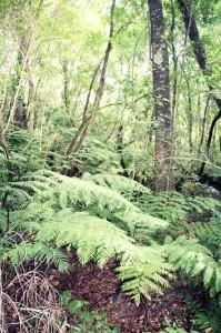 ForestWalk (6)